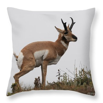 Throw Pillow featuring the photograph Antelope Critiques Photography by Art Whitton