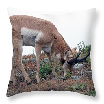 Throw Pillow featuring the photograph Antelope Grazing by Art Whitton