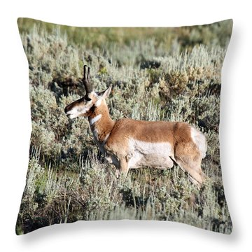 Antelope In Lamar Valley Throw Pillow