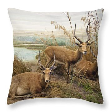 Antelope In The Grass Near The River Throw Pillow by Laura Ciapponi