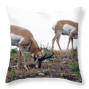 Throw Pillow featuring the photograph Antelopes Grazing by Art Whitton