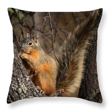 Apache Fox Squirrel Throw Pillow by David Salter