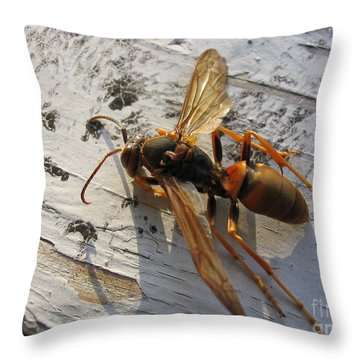 Throw Pillow featuring the photograph Apache Red Wasp by Mark Robbins
