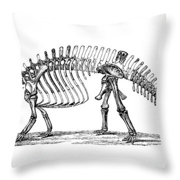 Apatosaurus Excelsus,  Aka Brontosaurus Throw Pillow by Science Source