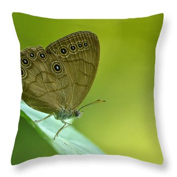 Throw Pillow featuring the photograph Appalachian Brown by JD Grimes