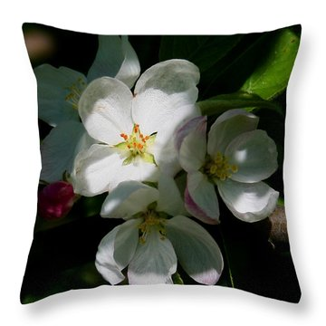 Apple Blossoms2 Throw Pillow