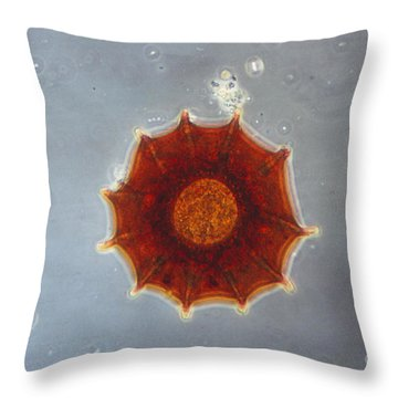 Arcella Dentata Lm Throw Pillow by Eric V. Grave