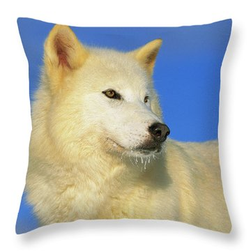Arctic Wolf Canis Lupus Portrait Throw Pillow