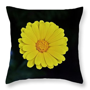 Artwork Of The Nature For A Moment Throw Pillow by Axko Color de paraiso