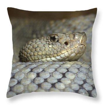Aruba Rattlesnake Crotalus Unicolor Throw Pillow by Gerry Ellis