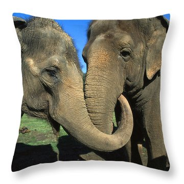 Asian Elephant Elephas Maximus Pair Throw Pillow by Zssd