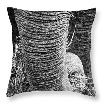 Asian Elephant Trunk Throw Pillow