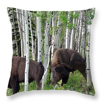 Aspen Bison Throw Pillow by Bill Stephens