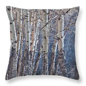 Throw Pillow featuring the photograph Aspen Grove by Colleen Coccia