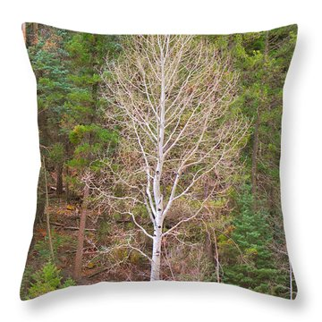 Aspen Tree Forest Road 249 Throw Pillow