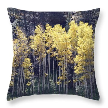 Aspens In Sunlight Throw Pillow