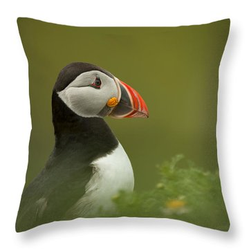 Atlantic Puffin Throw Pillow by Andy Astbury
