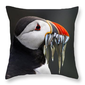 Atlantic Puffin Fratercula Arctica Throw Pillow by Wim Klomp
