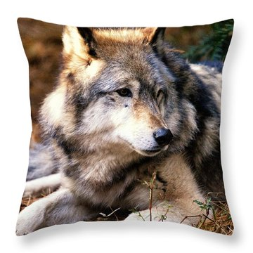 Attention Throw Pillow by Karol Livote