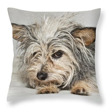 Attitude Throw Pillow by Jeannette Hunt