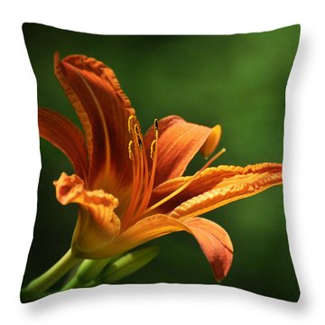 Auburn Throw Pillow by Rebecca Sherman