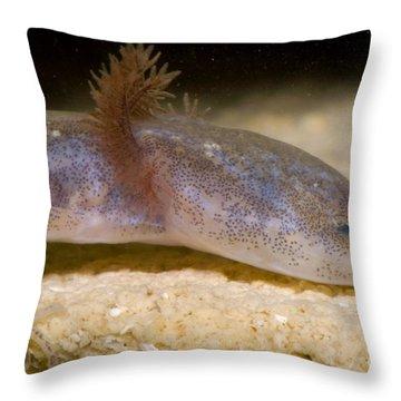 Austin Blind Salmander Throw Pillow by Dante Fenolio