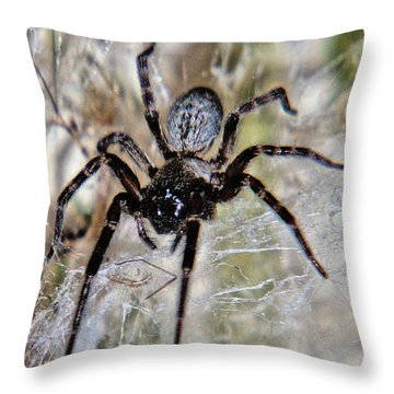 Australian Spider Badumna Longinqua Throw Pillow