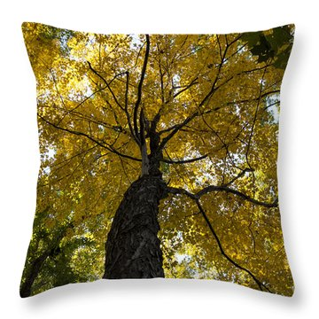 Autumn Colors Throw Pillow by Darleen Stry