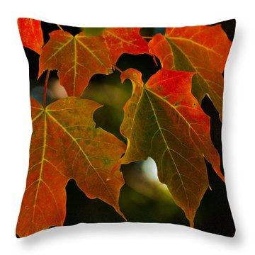 Throw Pillow featuring the photograph Autumn Glory by Cheryl Baxter