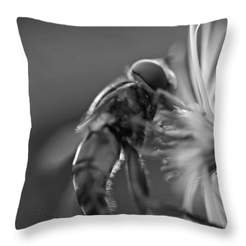 Autumn Harvest Throw Pillow by David Rucker
