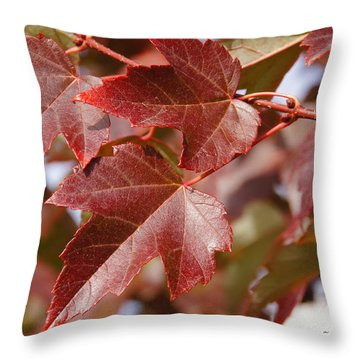 Autumn In My Back Yard Throw Pillow by Mick Anderson