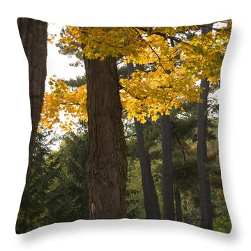 Throw Pillow featuring the photograph Autumn Leaves by Darleen Stry