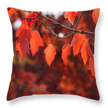 Throw Pillow featuring the photograph Autumn Leaves In Medford by Mick Anderson