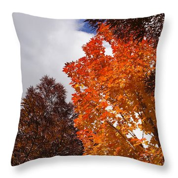 Throw Pillow featuring the photograph Autumn Looking Up by Mick Anderson
