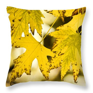 Autumn Maple Leaves Throw Pillow by James BO  Insogna