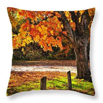Autumn Maple Tree Near Road Throw Pillow by Elena Elisseeva