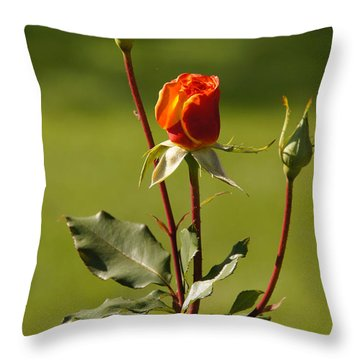 Autumn Rose Throw Pillow by Mick Anderson