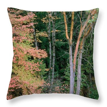 Autumn Scene Throw Pillow by Mark Greenberg
