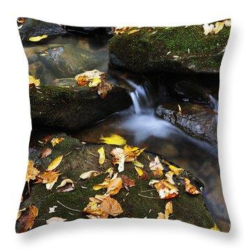 Autumn Stream Monongahela National Forest Throw Pillow by Thomas R Fletcher