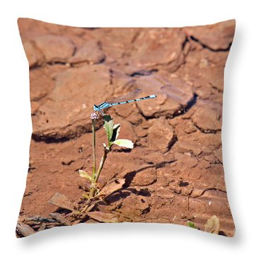 Azure Blue Damselfly Throw Pillow