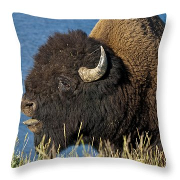 Baaa You Come Here Throw Pillow by Paul Cannon