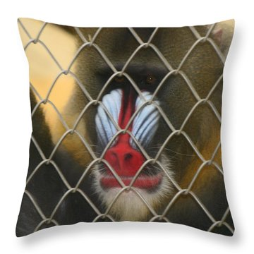 Baboon Behind Bars Throw Pillow by Kym Backland