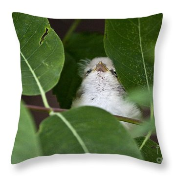 Baby Bird Peeping In The Bushes Throw Pillow by Jeannette Hunt