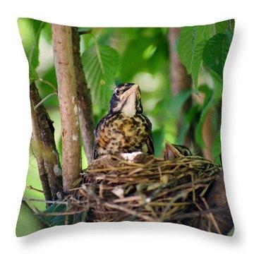 Baby Birds Throw Pillow by CJ Clark