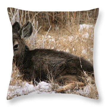 Baby Deer At Rest Throw Pillow by Nola Lee Kelsey