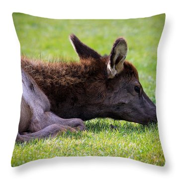 Throw Pillow featuring the photograph Baby Elk by Steve McKinzie
