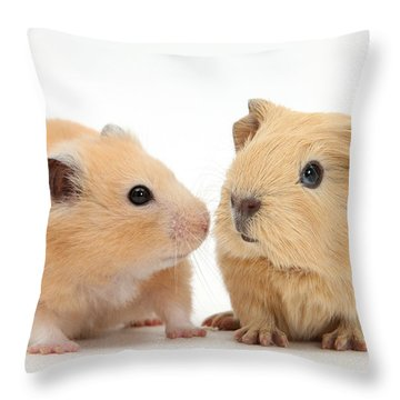 Baby Guinea Pig And Golden Hamster Throw Pillow by Mark Taylor