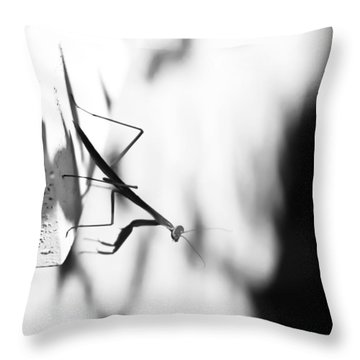 Baby Mantis Black And White Throw Pillow