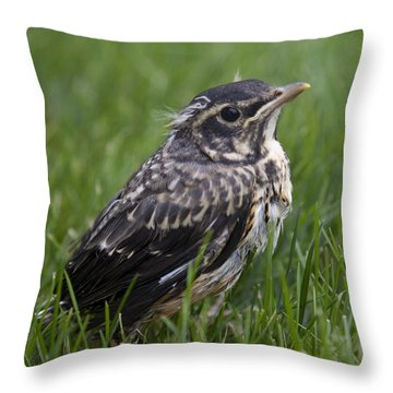Throw Pillow featuring the photograph Baby Robin by John Crothers