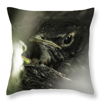 Throw Pillow featuring the photograph Baby Robin by Tom Gort